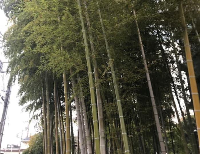 庭にある竹林